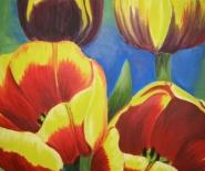 Rød/gule tulipaner