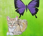 kat og sommerfugl