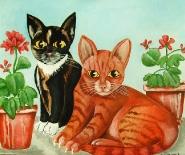 Rød og sort kat