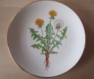 Dansk flora - mælkebøtte